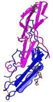 Свободная субъединица бета-ХГЧ (диагностика беременности, онкомаркер)